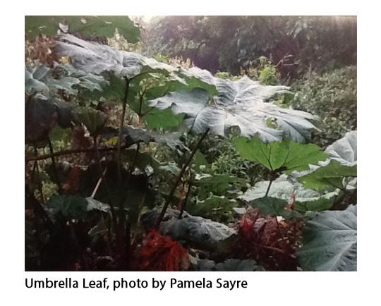 Umbrella Leaf.jpg