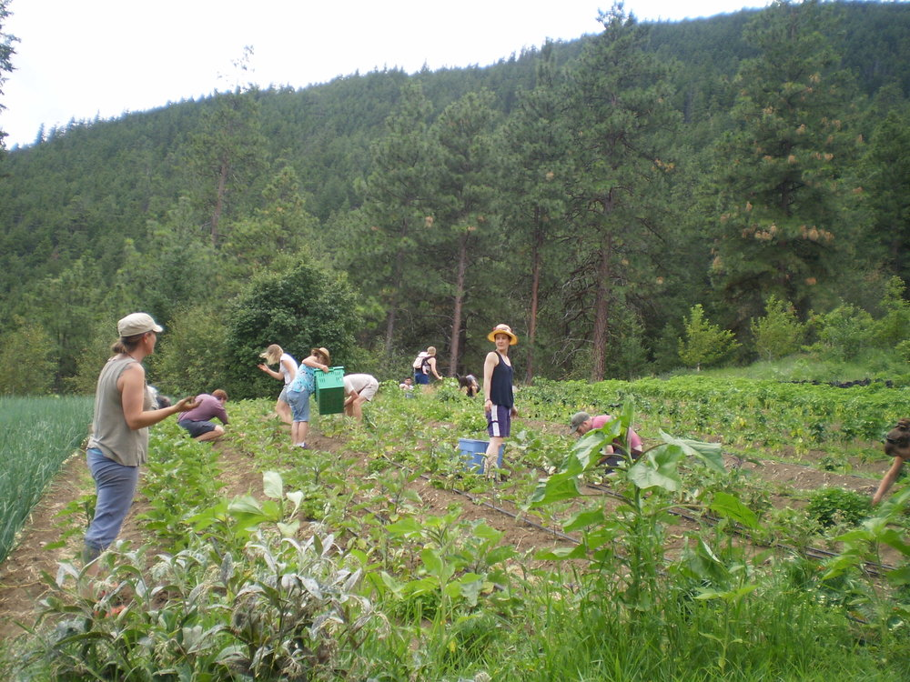 Katie and crew weeding.JPG