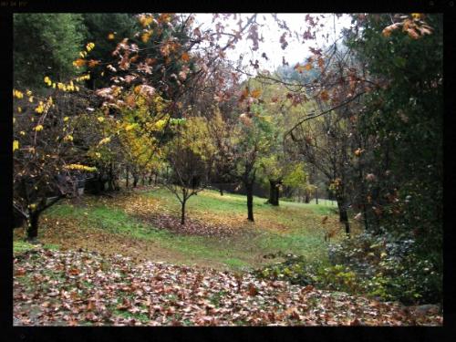 KRL fall Orchard.jpg