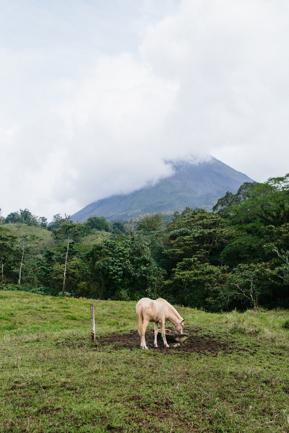 A beautiful horse peacefully drinks water and roams the green pastures that surround Arenal Volcano (seen covered by a layer of clouds in the background).