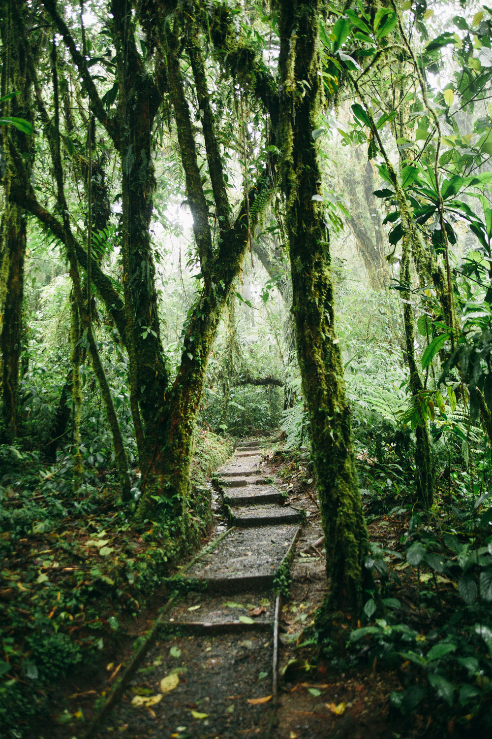 The beginning of the Santa Elena Reserve Caño Negro trail.