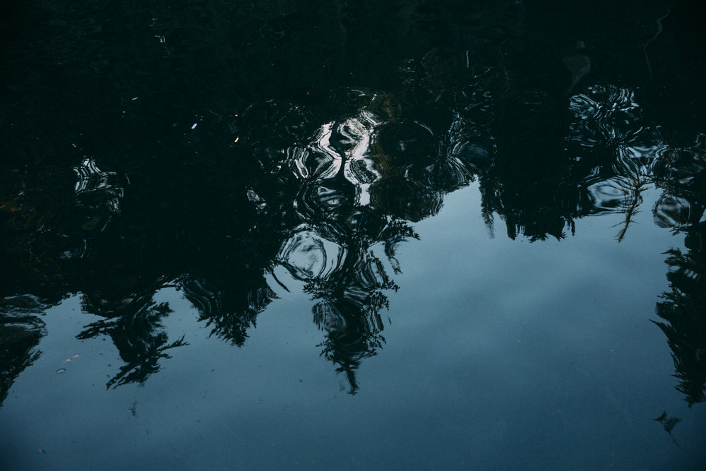 water trees reflection fine art Sonia Primerano Photography