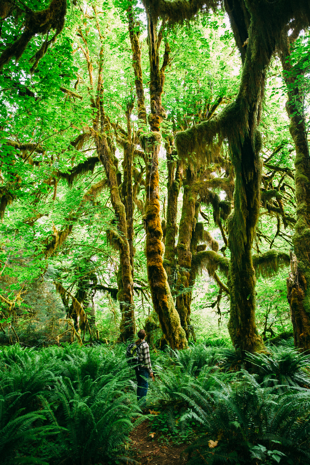 Hoh Rainforest Sonia Primerano