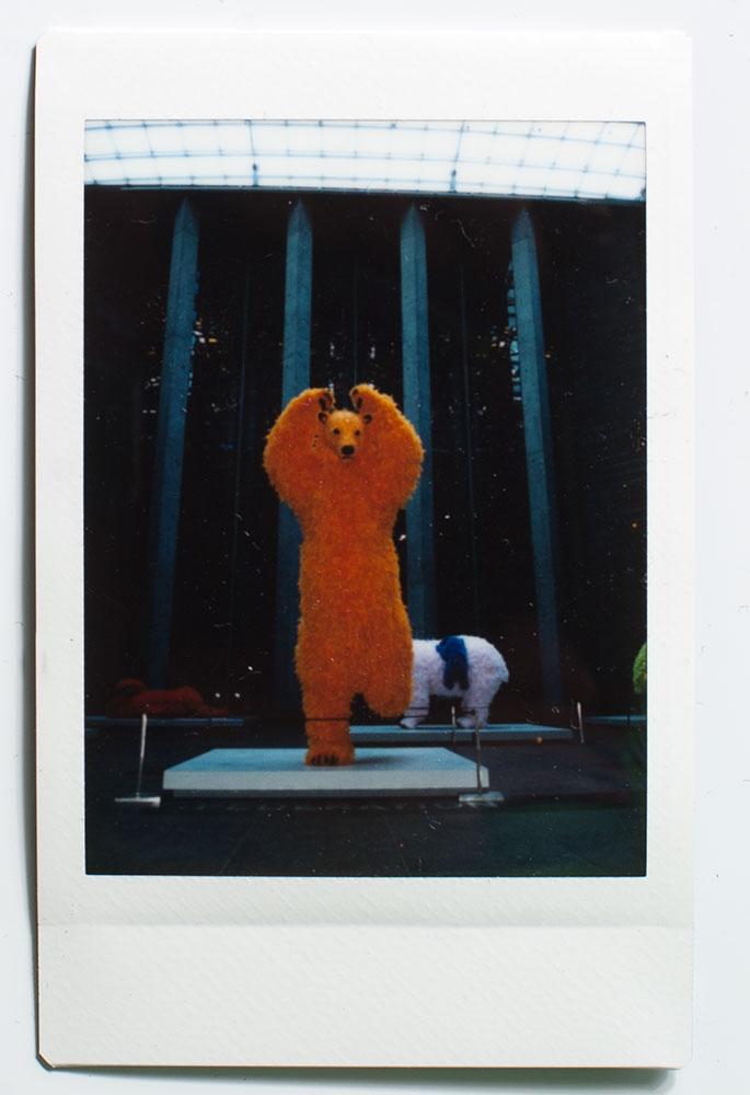 Orange Bears! YES!