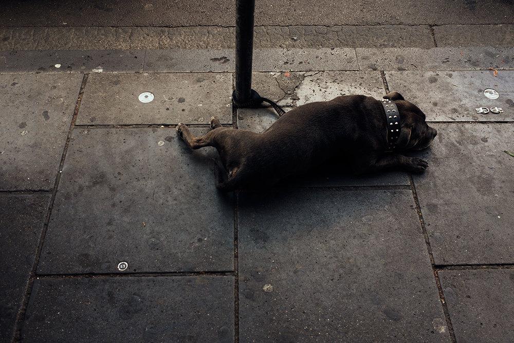 Sad_doggie.jpg