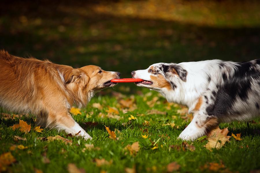 Photo credit: Ksuksa/bigstock.com