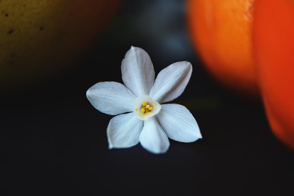 flower still 1.jpg