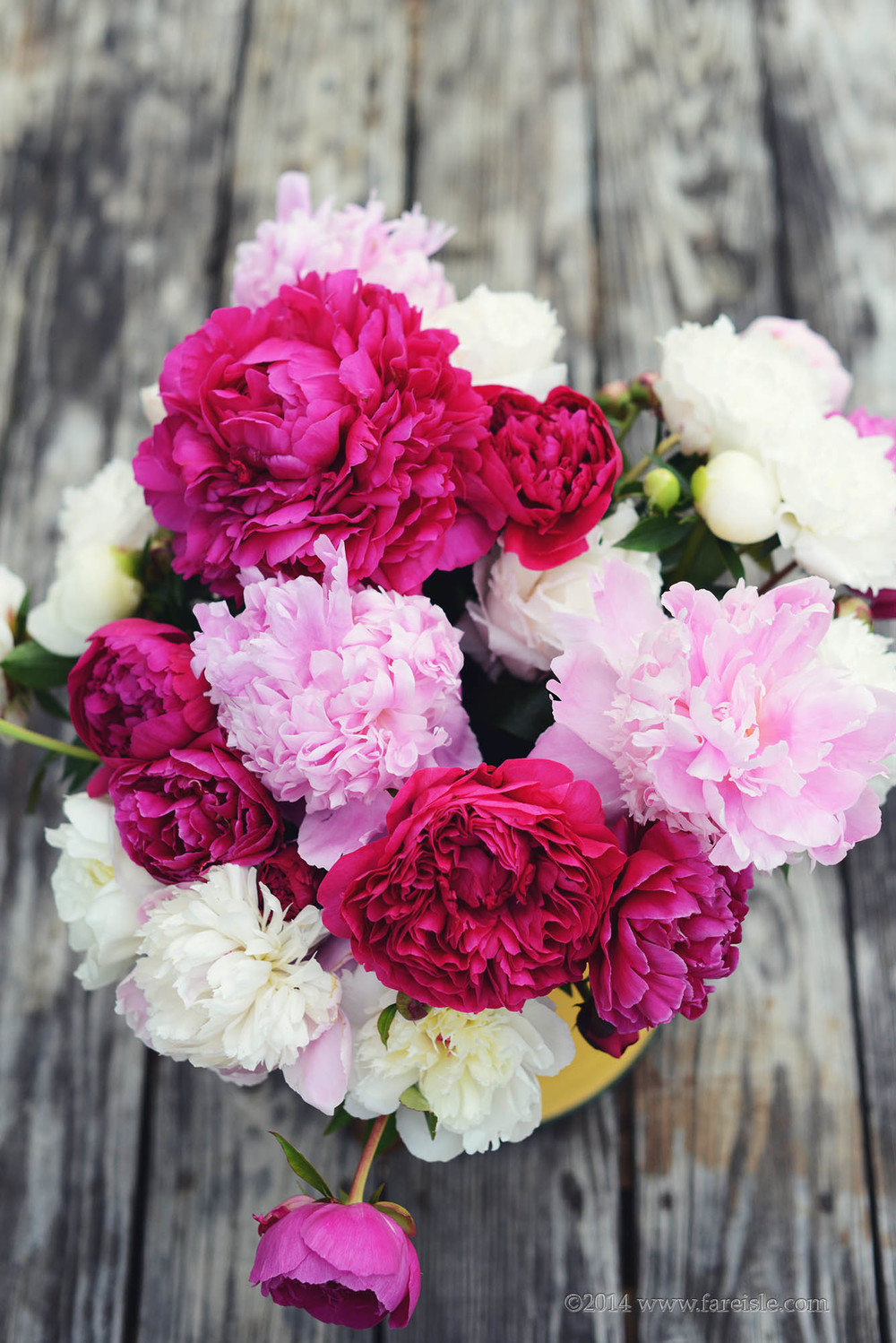 Fare Isle Blog Nantucket Peonies