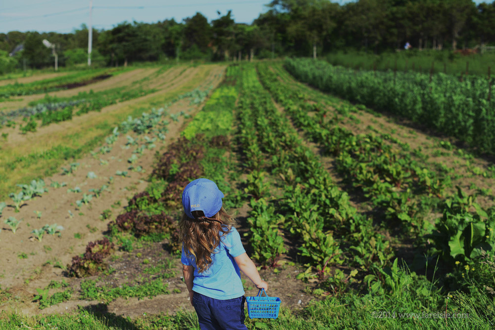 Fare Isle Blog: Nantucket Strawberries