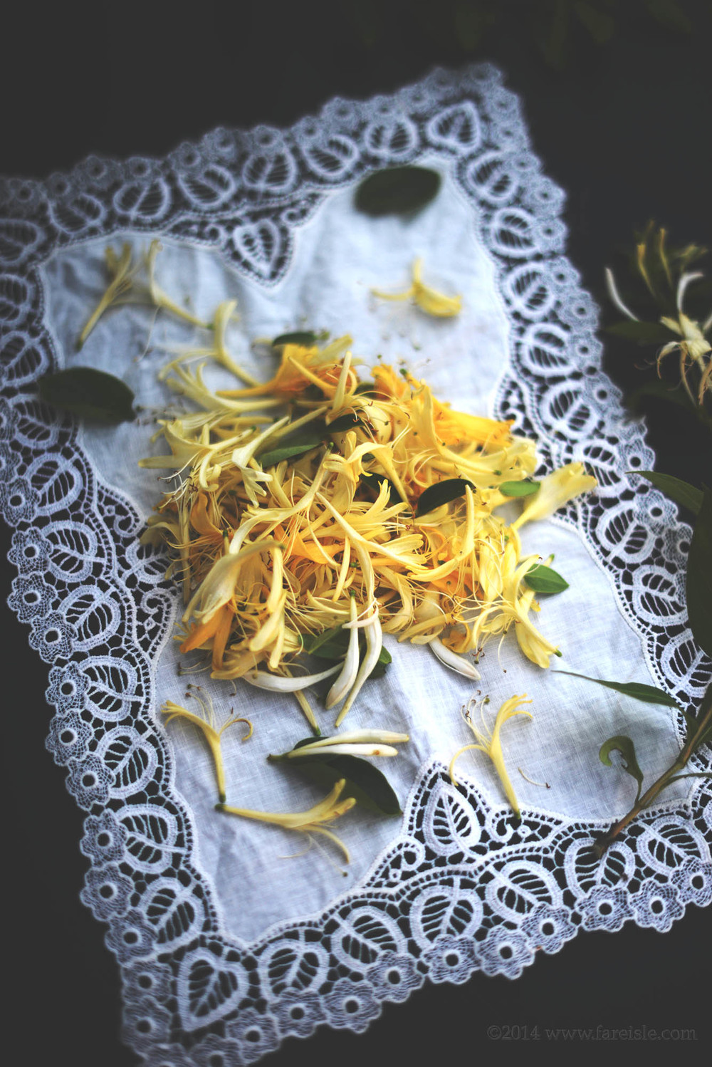 honeysuckle blossoms.jpg