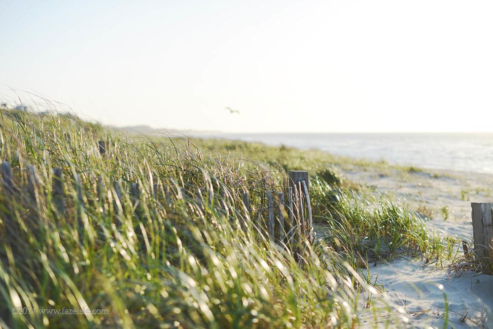 beach grass steps web.jpg
