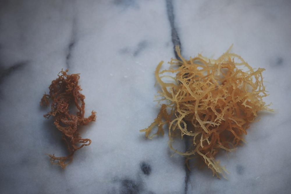 dried vs soaked irish moss