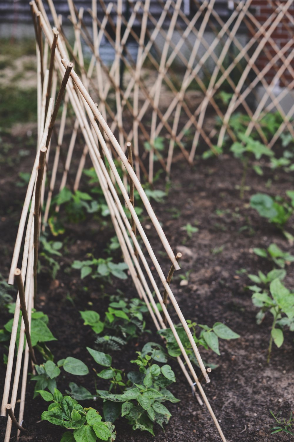 Marvelous Expandable Willow Trellis By Gardeners Supply Co.