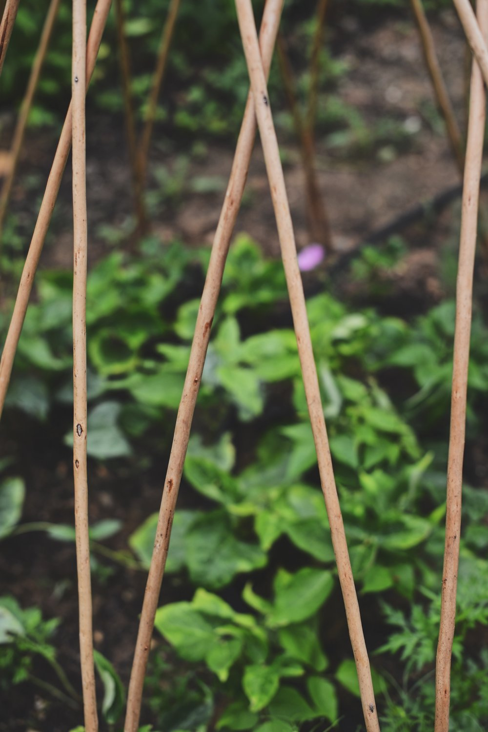 Large Expandable Natural Willow Trellis By Gardeners Supply Co.