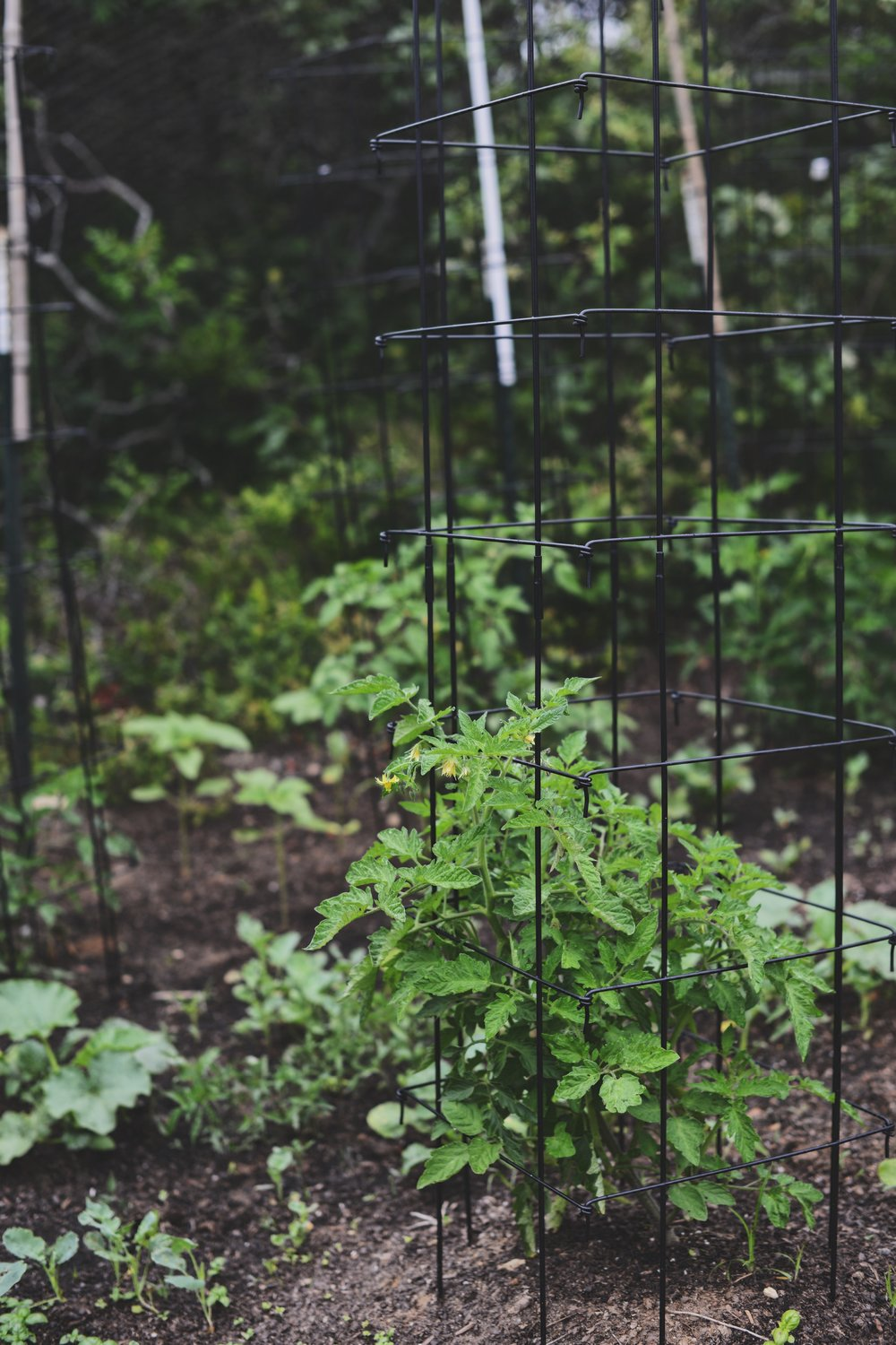 Extra-Tall Tomato Tower Cages by Gardeners Supply Co.