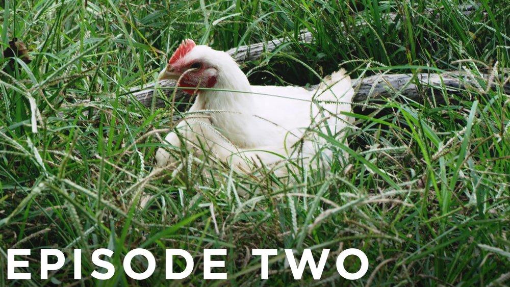 Episode Two_Thumbnail_LR.jpg