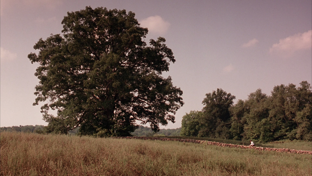 A still shot from the movie with Andy's tree where Red travels.