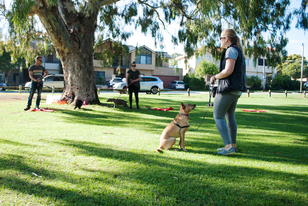 For Paws - Dog training Class - Evie.jpg