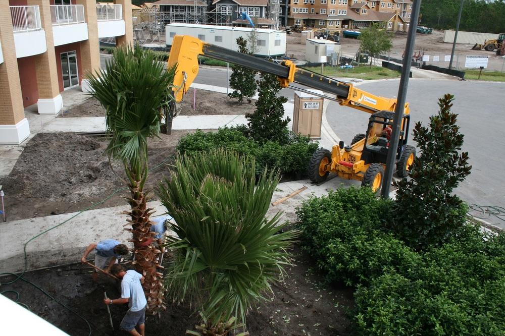 Town Center installing trees 2.jpg