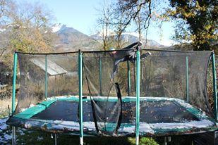 trampoline cork (2).jpg