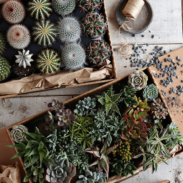 west+elm+succulents.jpg