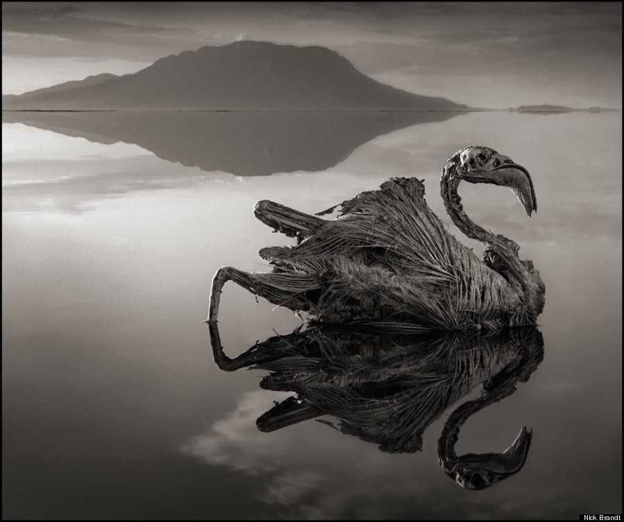 stone_animals_lake_03.jpg