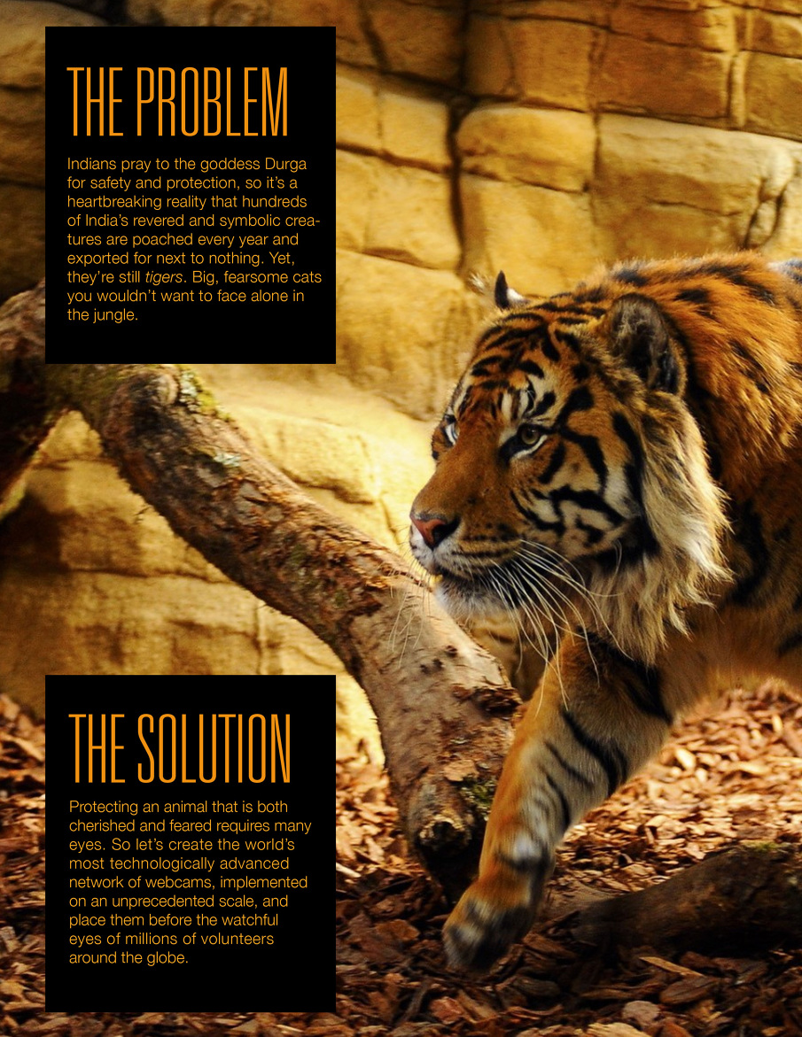 Tiger2_F_905.jpg