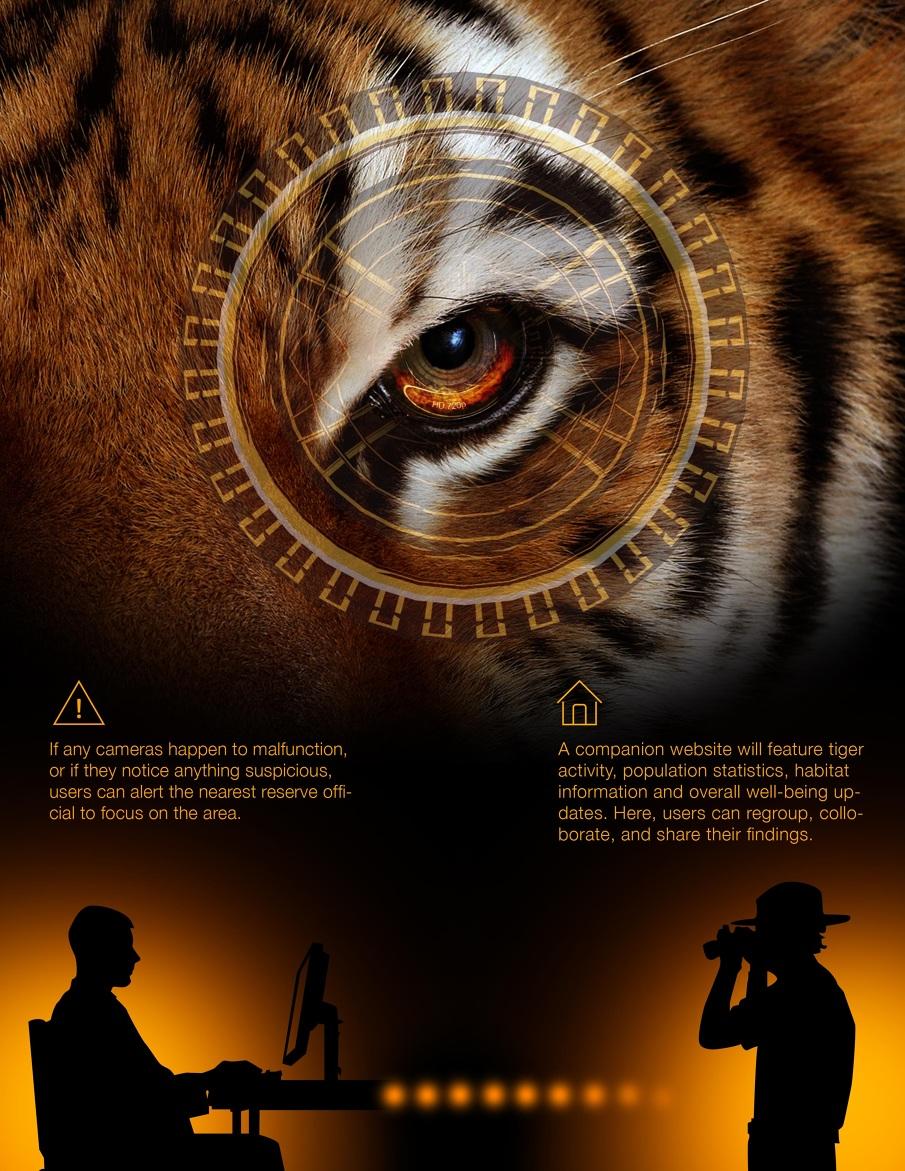 Tiger5_F_905.jpg