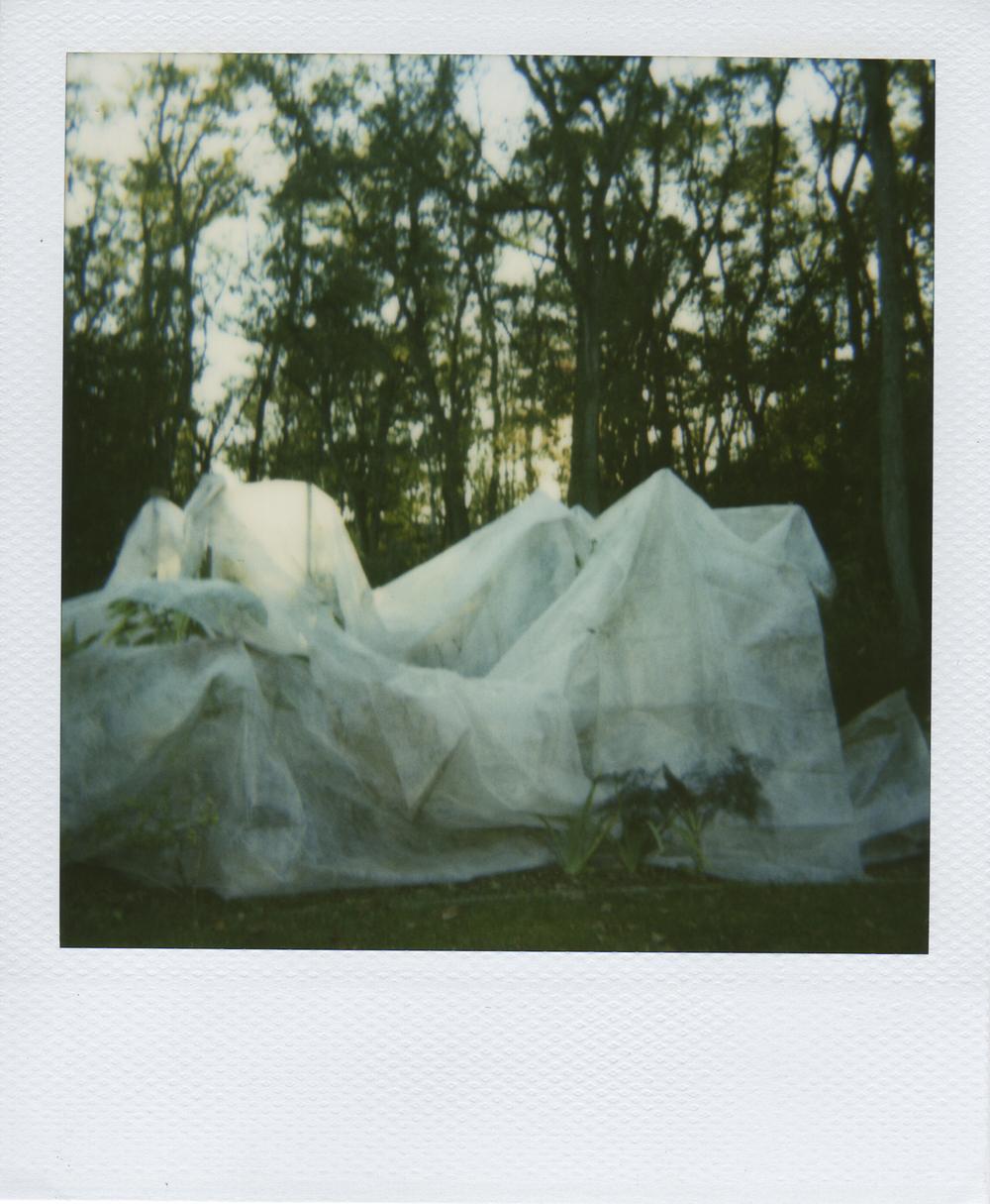 jlaurence-polaroid-019.jpg