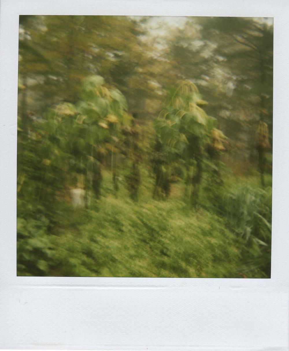 jlaurence-polaroid-035.jpg