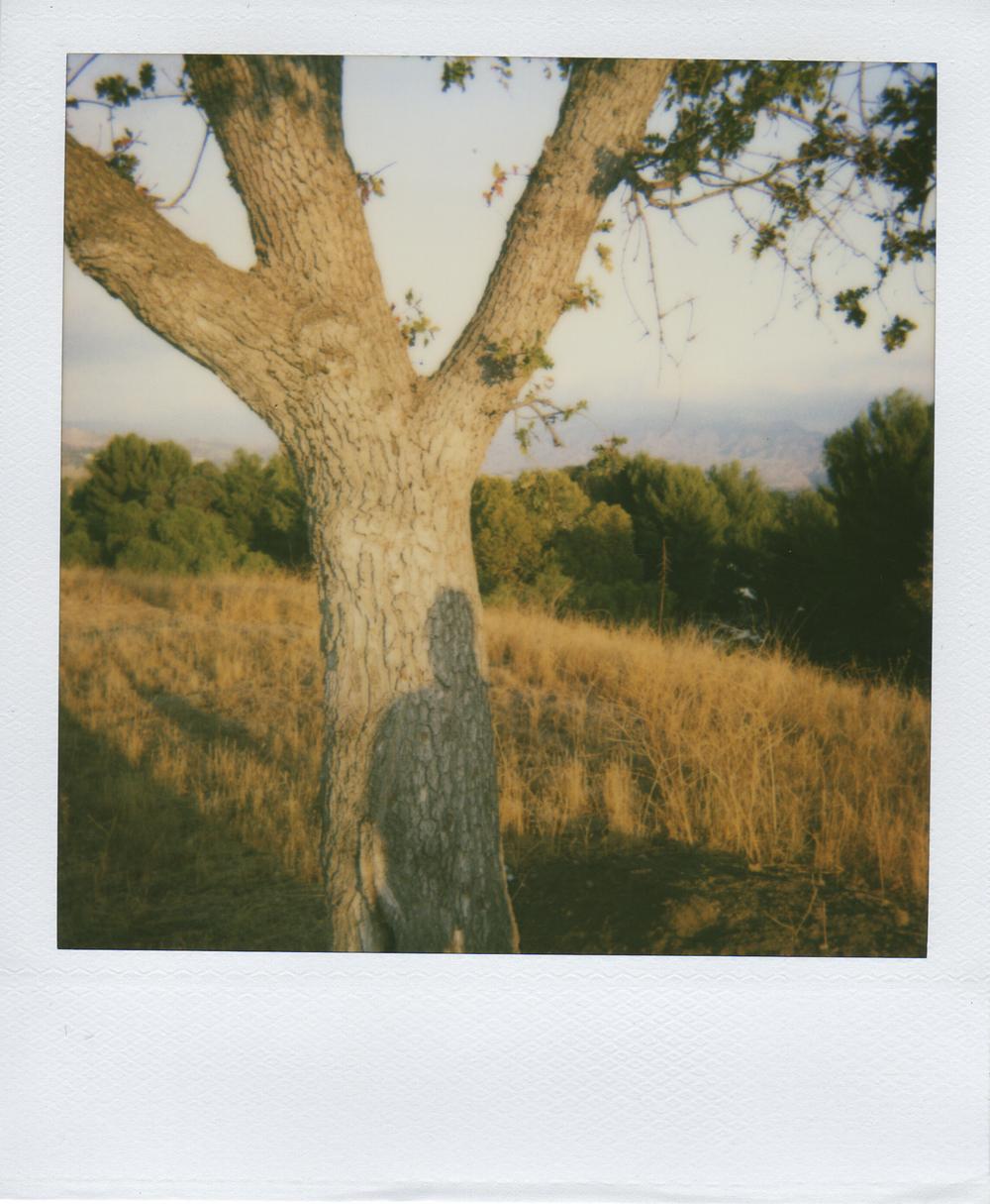 jlaurence-polaroid-039.jpg