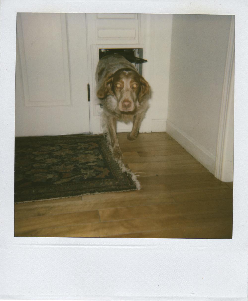jlaurence-polaroid-047.jpg