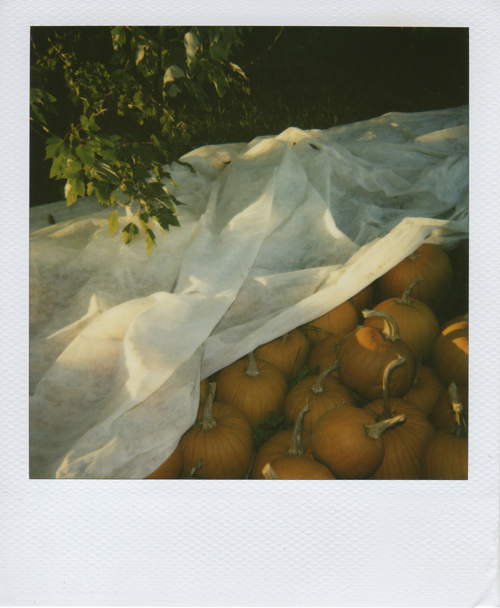 jlaurence-polaroid-060.jpg
