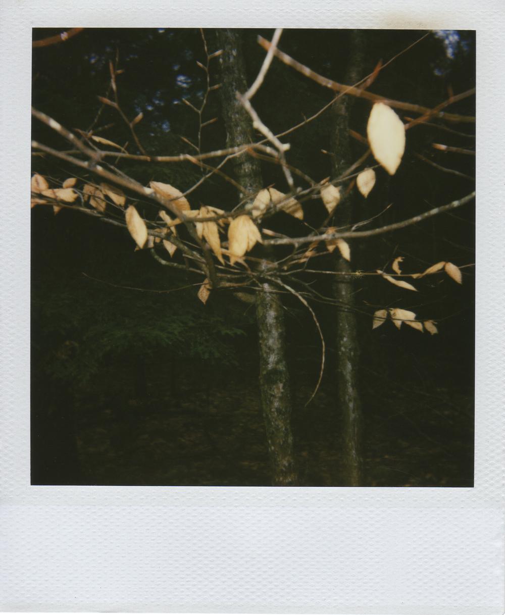 jlaurence-polaroid-069.jpg