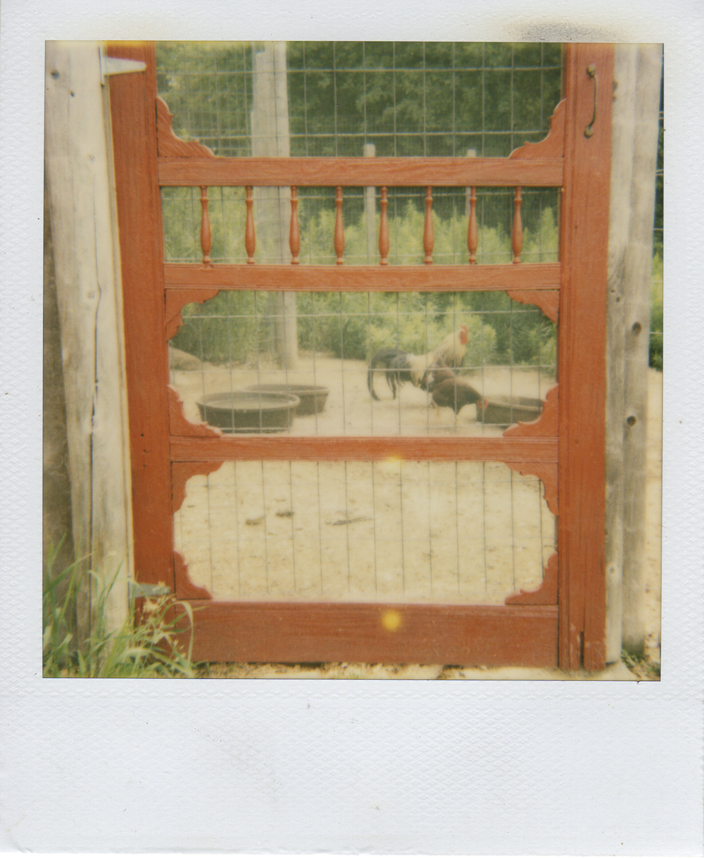 jlaurence-polaroid-082.jpg