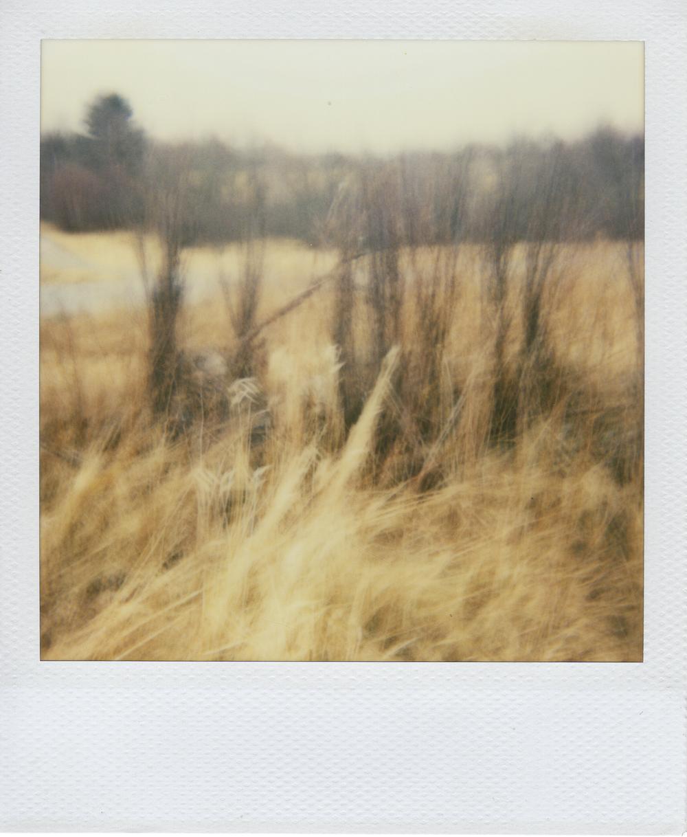 jlaurence-polaroid-089.jpg