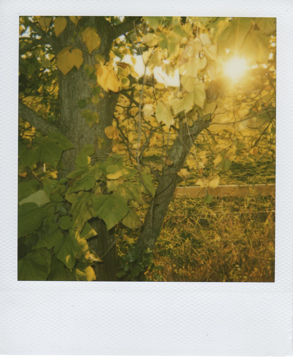 jlaurence-polaroid-095.jpg