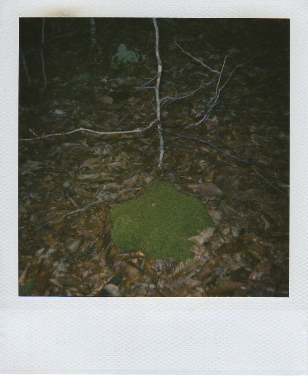 jlaurence-polaroid-122.jpg