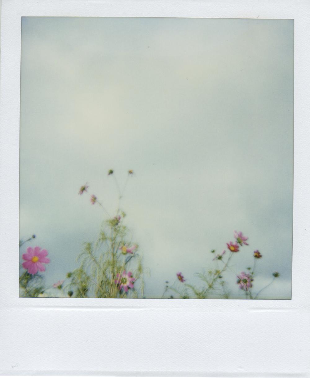 jlaurence-polaroid-137.jpg