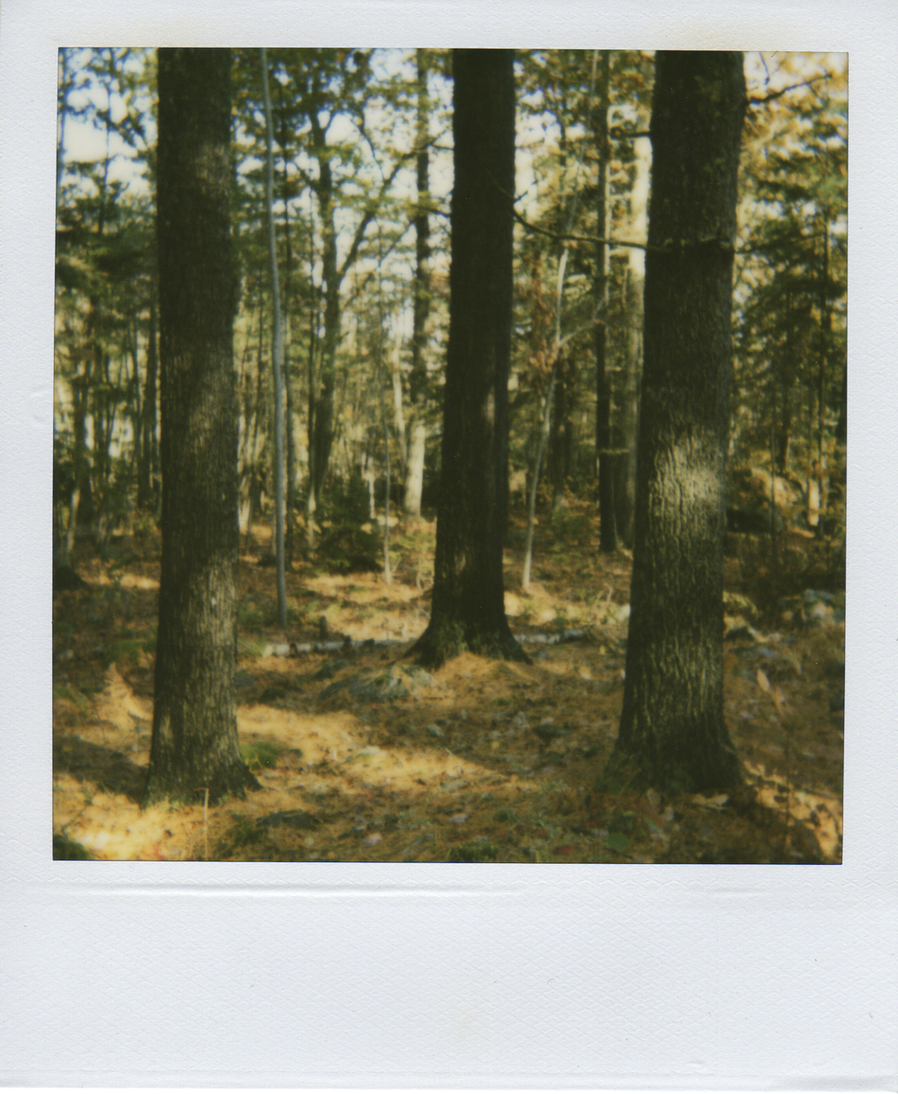 jlaurence-polaroid-140.jpg