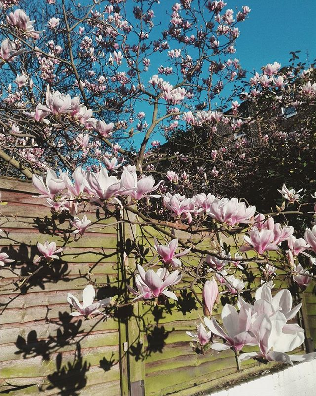 Look at these beautiful flowers in our garden! Spring is coming 🌼 you can enjoy the sunshine here or even have a nice breakfast 🍳☕ #StJamesHostel #springiscoming #hostellife #flowers #beautifulday