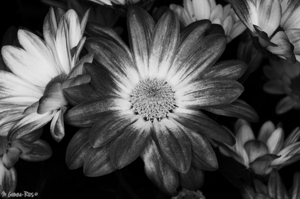 MGRflora-2.jpg