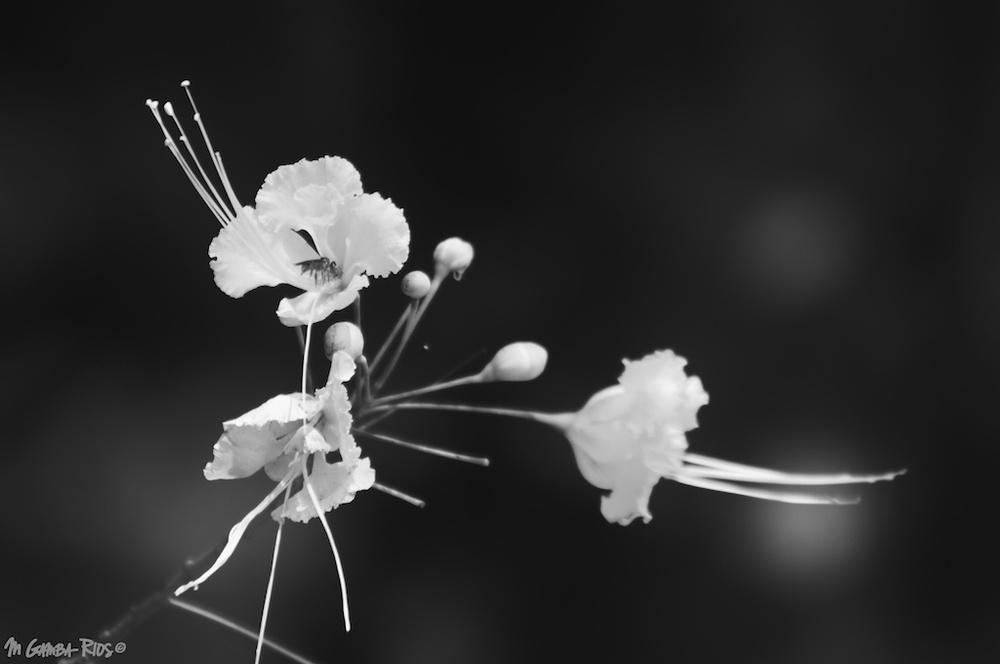 MGRflora-11.jpg