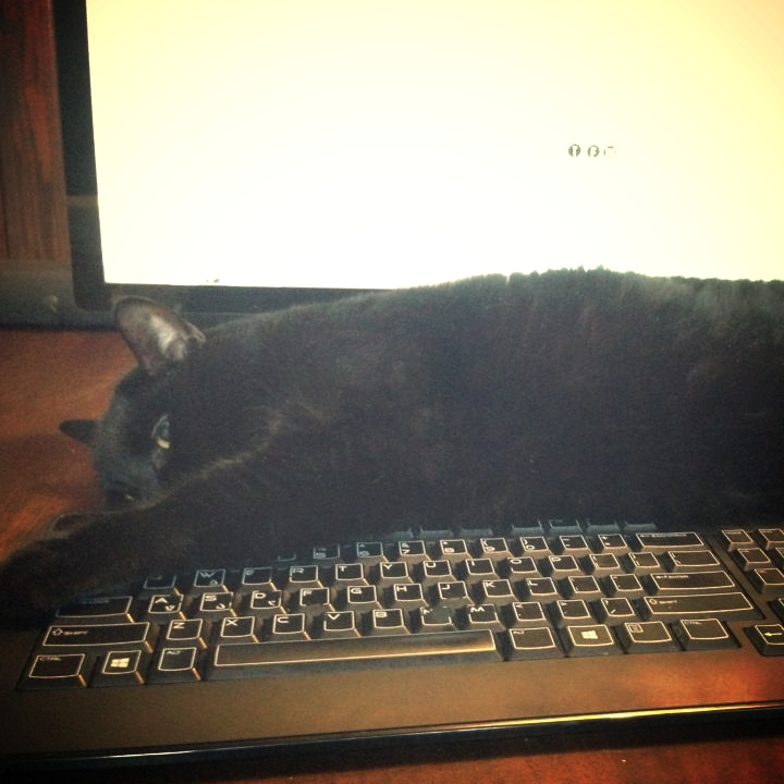 catkeyboard.jpg