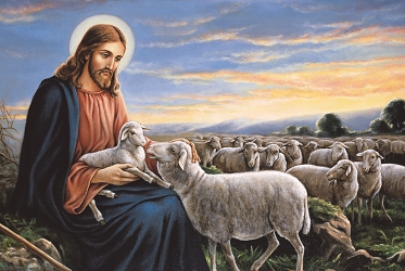 secondsunday in ordinary time (Year B) - The good shepherd is on who lays down his life for His sheep