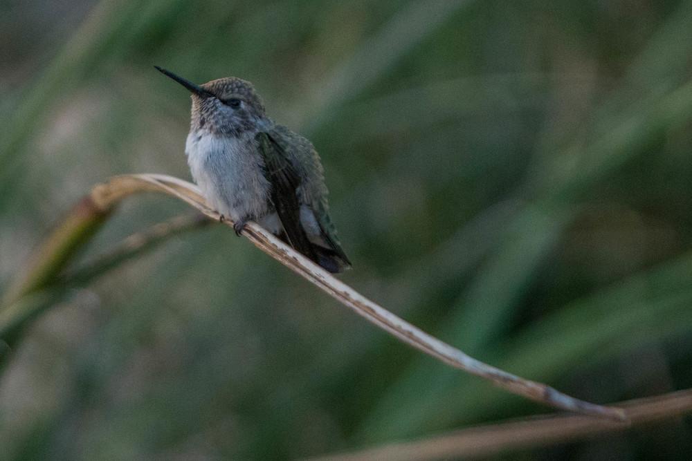 04-2014_Hummingbird.jpg