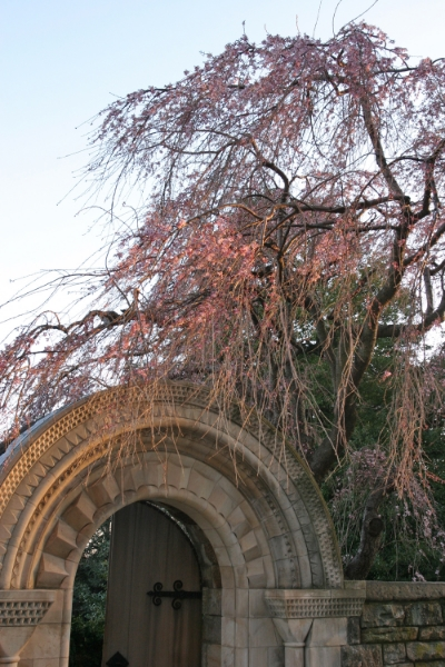 Bishop's Garden Gate, Washington National Cathedral, Washington, DC, March 2006  .         (Photograph by Michael Riddle. )