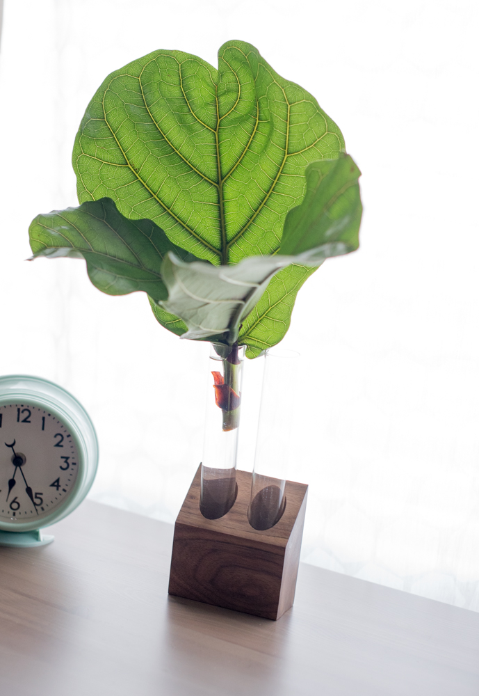 Fabian, the Fiddle Leaf Fig.