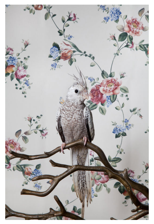 One of the many striking images in Claire Rosen's bird series