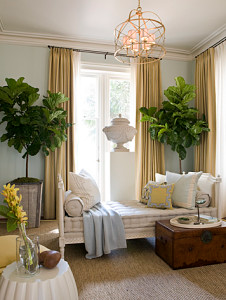 http://www.thenakeddecorator.com/2013/05/10/why-we-love-fiddle-leaf-fig-trees/fiddle-leaf-dc-design-house/